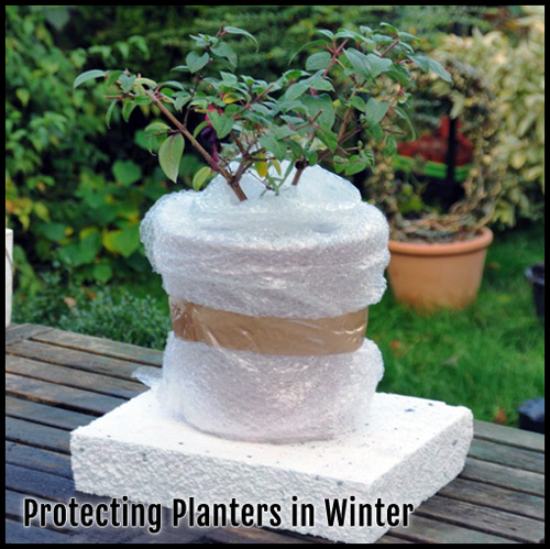 8582-Winter-Pots