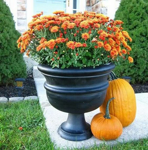 8587-Potted-Mums-For-Fal