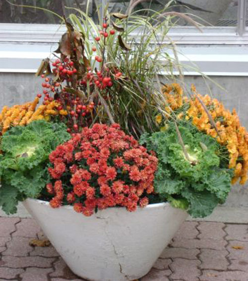 8588-Potted-Mums