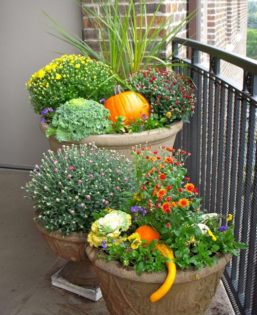 8589-Potted-Mums-In-Gard