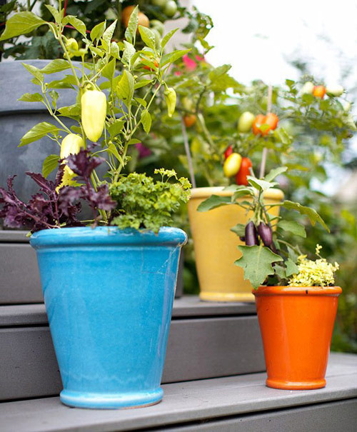 8594-Vegetable-Pots-For-
