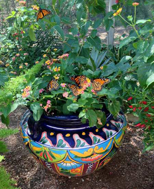 8629-Butterfly-Container
