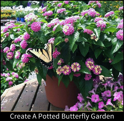 8631-Potted-Butterfly-Ga