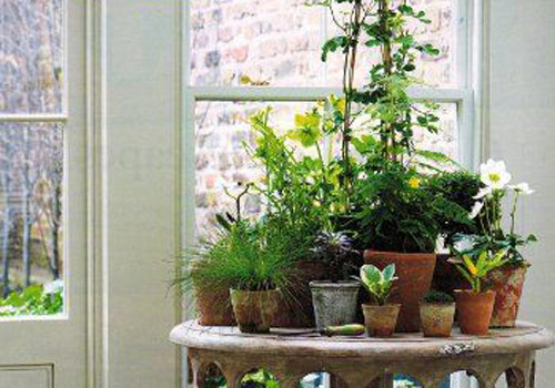8639-Houseplants-Grouped