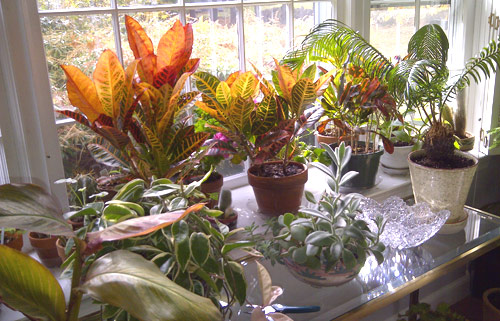8640-Houseplants-In-Wint