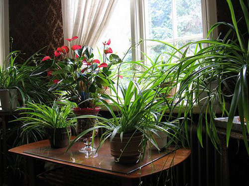 8641-Houseplants-In-Wint