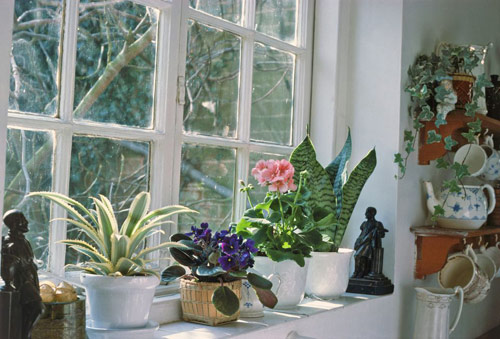 8714-Indoor-Houseplants
