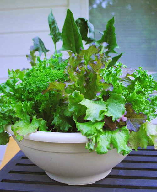 8718-Grow-Salad-In-A-Pot