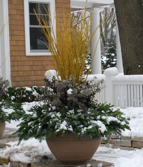 8786-Winter-Pots