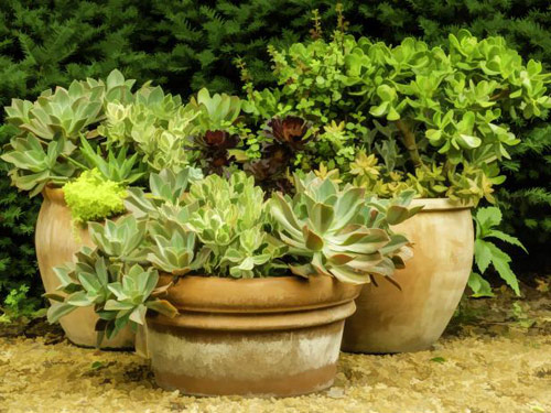 8789-Garden-Containers