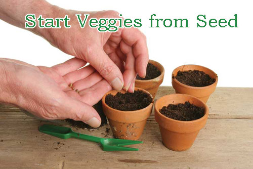 8802-Veggies-From-Seeds