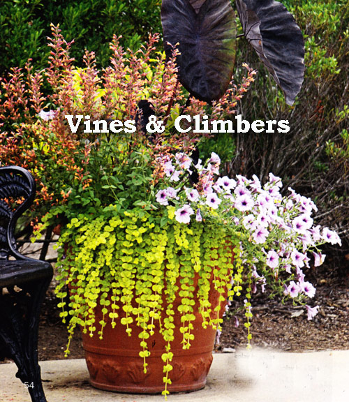 8821-Vines-And-Climbers-