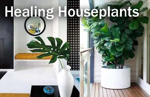 8844-Healing-Houseplants