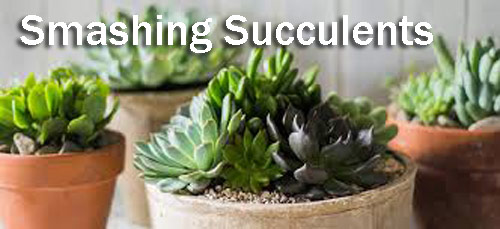 8853-Smashing-Succulents