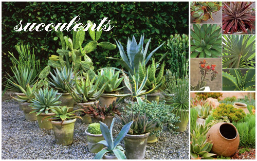 8926-Potted-Succulents