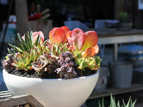 8929-Potted-Succulents