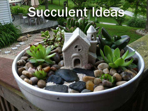 8942-Succulent-Tips-And-