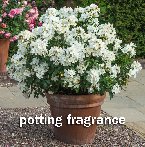 8958-Potting-Fragrance