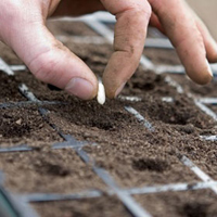 473-Seeds-In-Trays