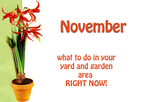 15972---November-In-Your-Garden-With-Pottery-And-Pots