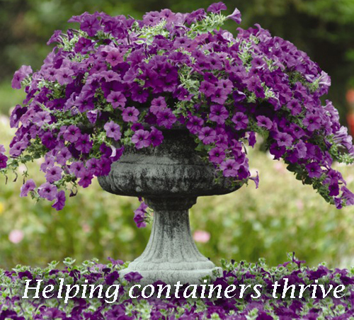 16070-Containers-Thrive-Arizona-Pottery