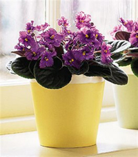 16122 African-Violet-Planter-Arizona-Pottery