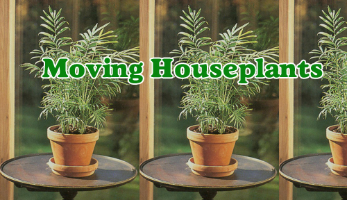 16145-Moving-Houseplants-Ariozna-Pottery