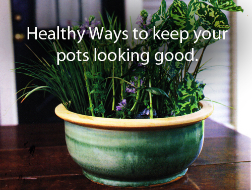 16165--Healthy-Ways-To-Keep-Indoor-Pots-Looking-Good-Arizona-Pottery