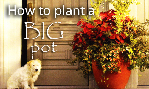 16173-How-To-Plant-A-Big-Pot-Arizona-Pottery