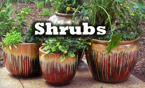 16181-Shrubs-In-Pots-Arizona-Pottery
