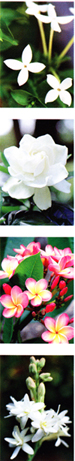 18954-Photos-Of-Flowers-For-Pottery
