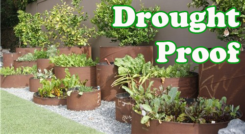 18977-Drought-Proof-Containers