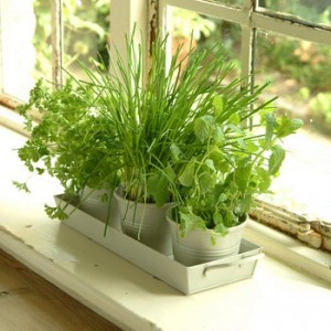 31139-Windowsill-Gardens