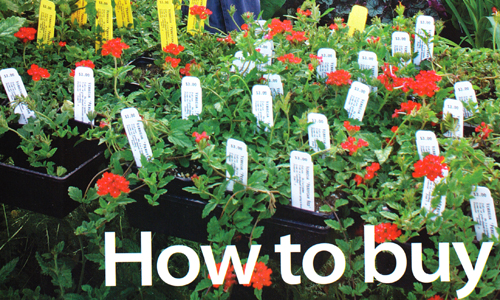 31361-How-To-Buy-Garden-Plants