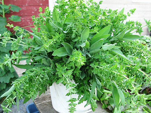 Sum Parsley Sage Oregano