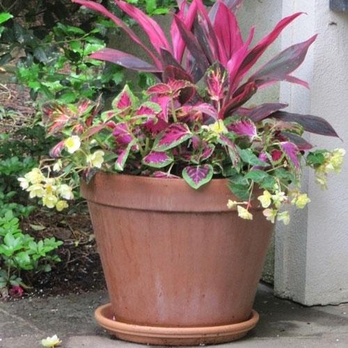 Standard Italian Terracotta Flower Amp Clay Pots Arizona