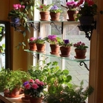 Indoor window flower garden.