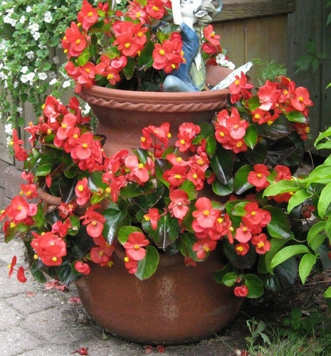 Garden Pot That Hold Strawberry Plants In Cut Outs Made Of