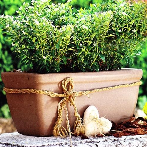 Moka Clay Rectangle Window Box Garden Planter Made In
